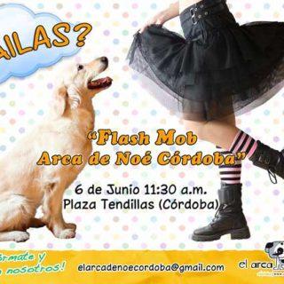 El Flashmob canino con el Arca de Noé es una fantástica forma de colaborar en la construcción del nuevo albergue para perros y gatos abandonados.