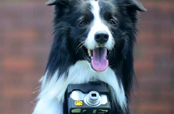 Cámara Nikon para perros