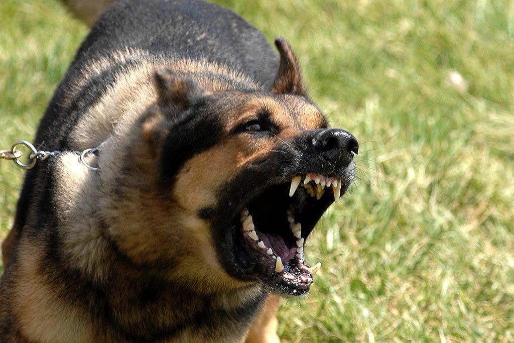 Resultado de imagen para perro agresivo