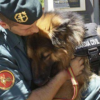 @retireddogs112. Adoptar perros jubilados de la policía o de unidades caninas es posible gracias a Retired Dogs 112.