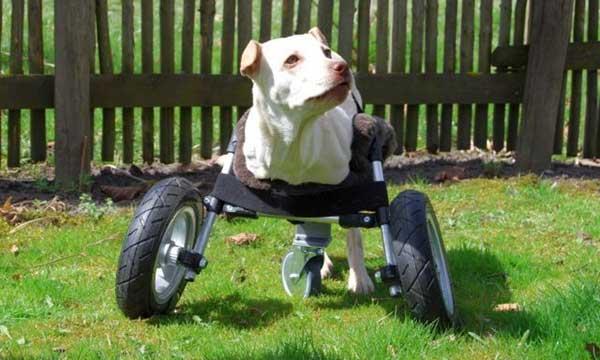 Una silla de ruedas para perros por 130 euros (planos y documentación de acceso libre).