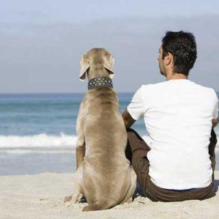 @kiwoko Consejos para cuidar a tu perro mayor (más de 7,5 años).