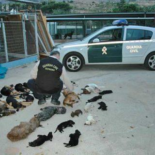 El Refugio pide cuatro años de prisión para la presidenta de la protectora de Torremolinos, Carmen Marín.