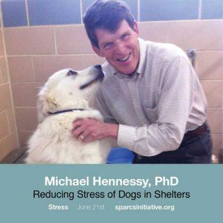 Reducir el nivel de estrés en las perreras ayudaría a potenciar las adopciones.