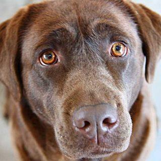 """¿Cuánto cuesta """"tener"""" un perro?... Las """"cuentas"""" te van a sorprender."""