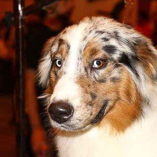 La zona de confort (en el aprendizaje canino)