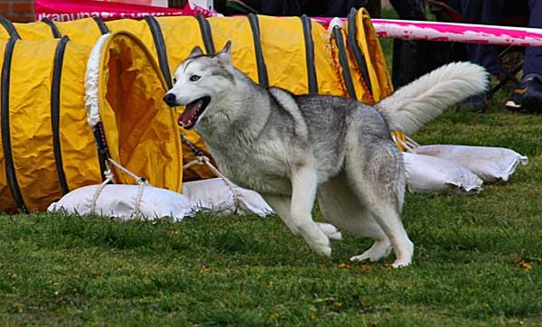Perros de deporte.