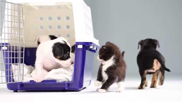 Qué sucede cuando se ven por primera vez perros y gatos