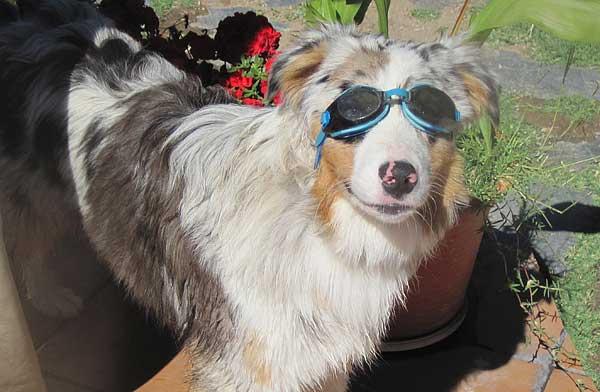 Vacaciones con perros, 7 puntos a tener en cuenta.