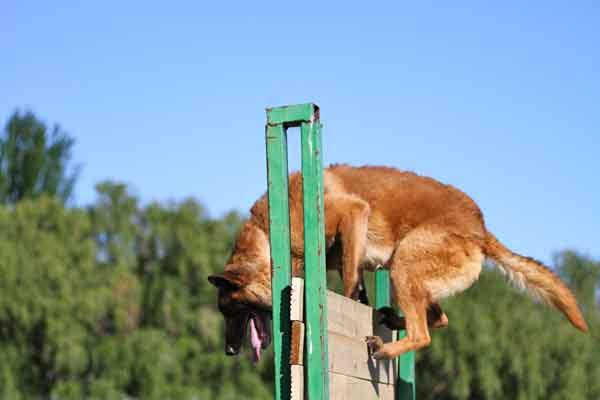 """#Perros y deporte. ¿Puede un perro de deporte ser """"multidisciplinar""""?"""