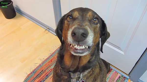 Los perros... ¿Se sienten culpables? ¿o tal vez piden perdón? (vídeo).