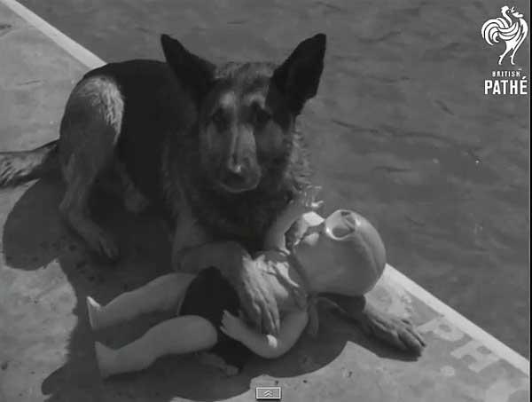 Perro de rescate acuático... ¡En 1939!