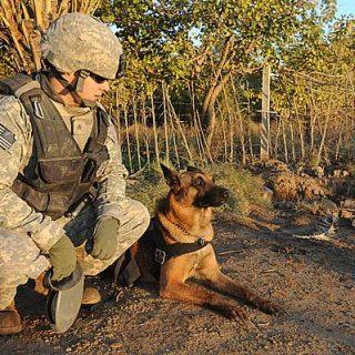 9 Mitos sobre los #perros militares (y las respuestas no son lo que imaginas) C/vídeo.