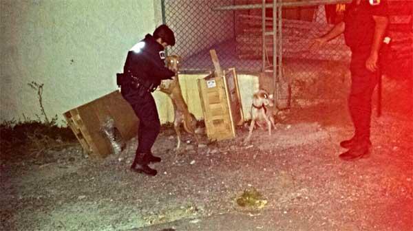 La Unidad Canina de la Policía Local rescata a dos perros amarrados y abandonados en Barranco Seco.