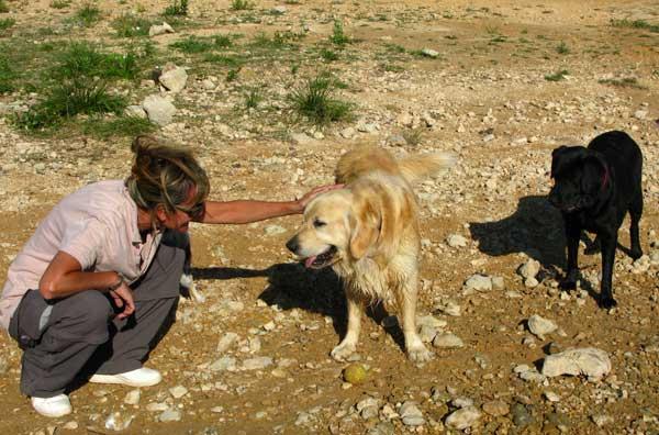 Las 7 cosas que debes hacer con tu perro en vacaciones