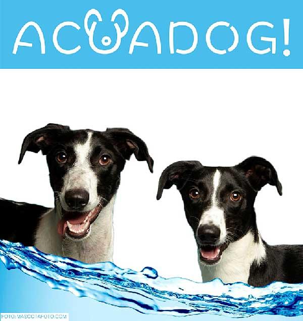 Acuadog 2015: Día de piscina con nuestros #perros en el sur de Madrid.