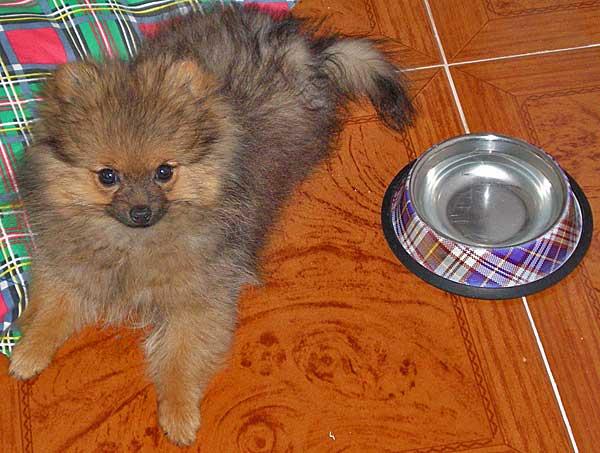 Triptófano. Problemáticas de Comportamiento y Conducta en #perros derivados de la Alimentación.