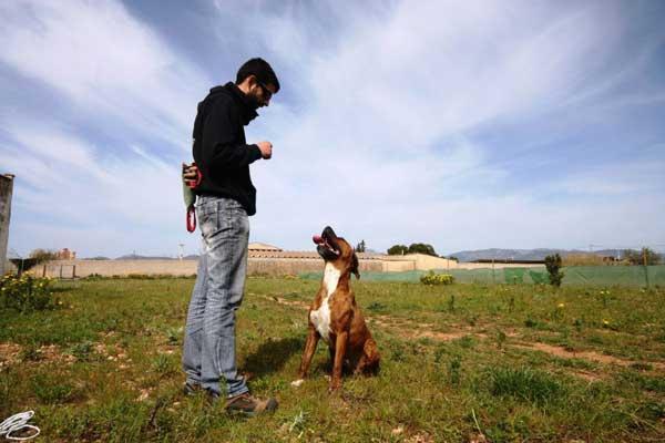 """#Adiestramiento #Perros Hacer entrar a un perro """"en vereda""""... ¿Por cualquier medio?"""