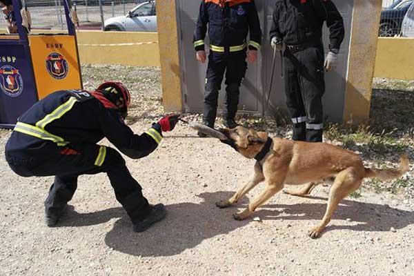 Curso de figurantes-preparadores de perros de rescate, en Madrid