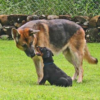 Socialización de cachorros ¿y si lo planificamos?