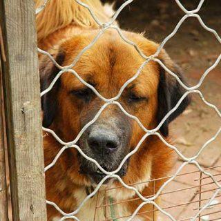 #Perros abandonados: La Comunidad de Madrid destina más de 300.000 euros a la gestión del Centro Integral de Acogida de Animales.