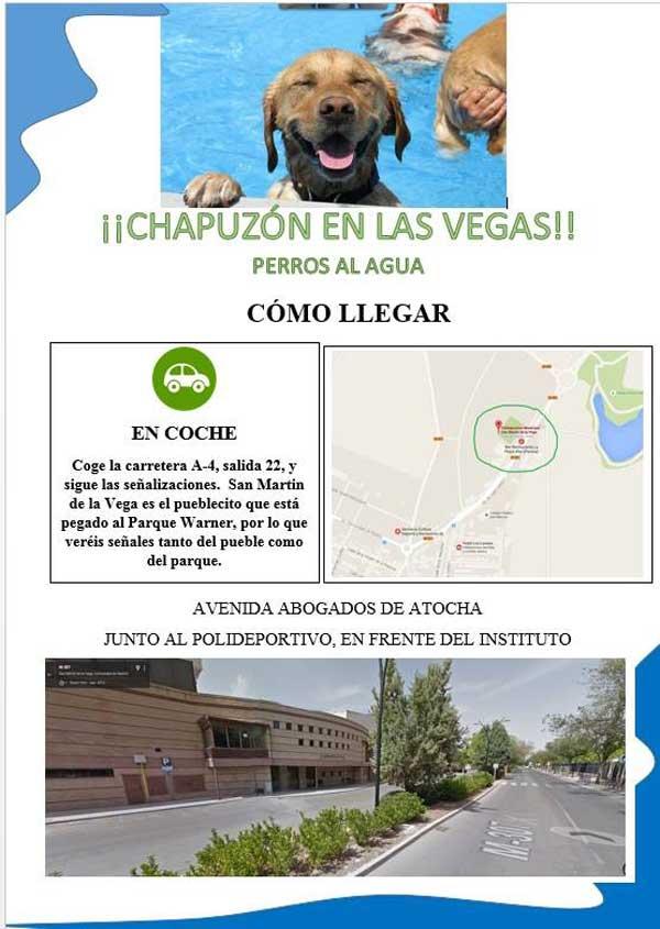 Piscina para #perros: Se celebra la primera edición de ¡Chapuzón en las Vegas! en la piscina municipal de San Martin de la Vega.