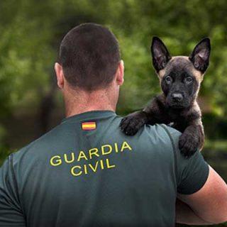 #Fotografía. #Perros. Un Guardia Civil y su perro, ganan el concurso fotográfico de EUROPOL.