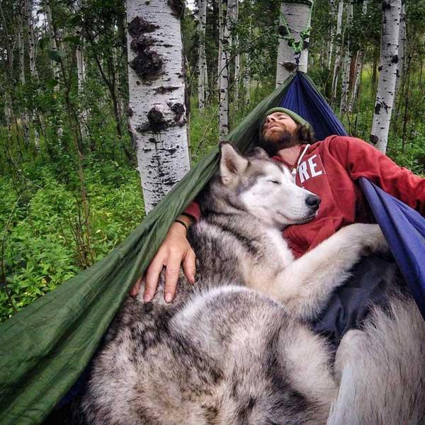 Fotografiando la vida con un husky.