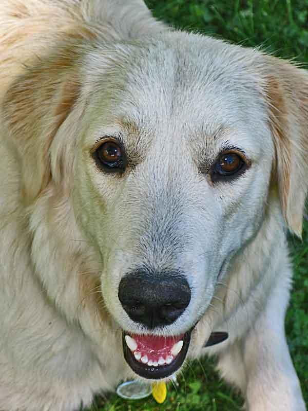 Cómo funciona el Miedo en los #perros y su importancia en etapas tempranas. El miedo como emoción adaptativa.