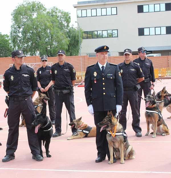 """""""Nena"""" de la Policía Nacional recibe el premio al mejor perro de 2014 con la Mención de Servicios Distinguidos"""