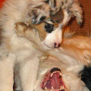 Vivir con varios perros puede tener sus ventajas, pero no todo lo que escuchas es cierto