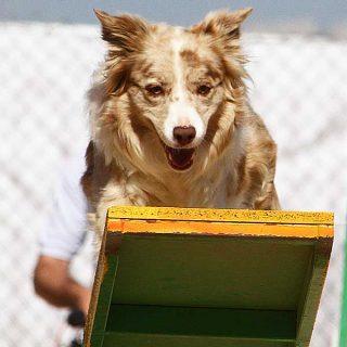 """¿Cuánto debe entrenar un perro? No olvides que los #perros de deporte... son también perros """"normales""""."""