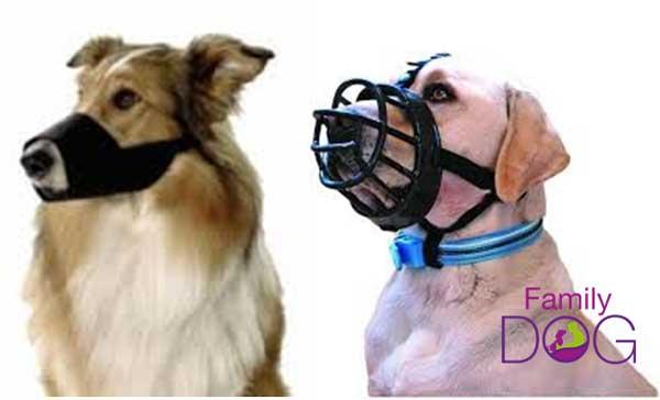 Bozales para #perros, ¿por qué están mal vistos? El bozal no es un estigma, es una herramientas muy útil.