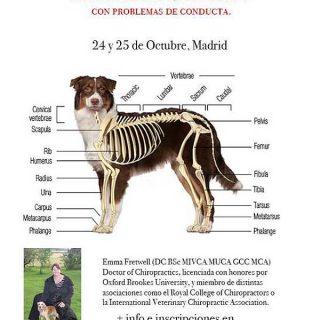 #Veterinaria #Perros. Rehabilitación y cuidados del perro deportivo y de familia, interesantísimo seminario en Madrid, a cargo de Emma Fretwell.