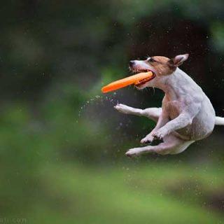 Fotografía de #perros... En acción. Claudio Piccoli es otro nivel.