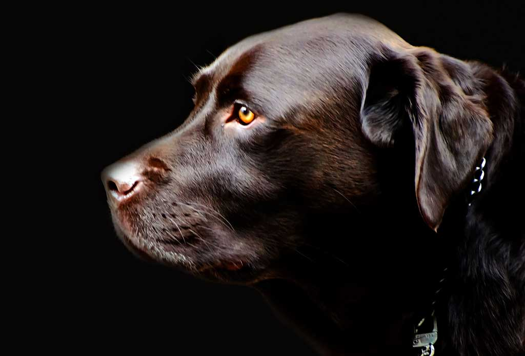Edades-perro