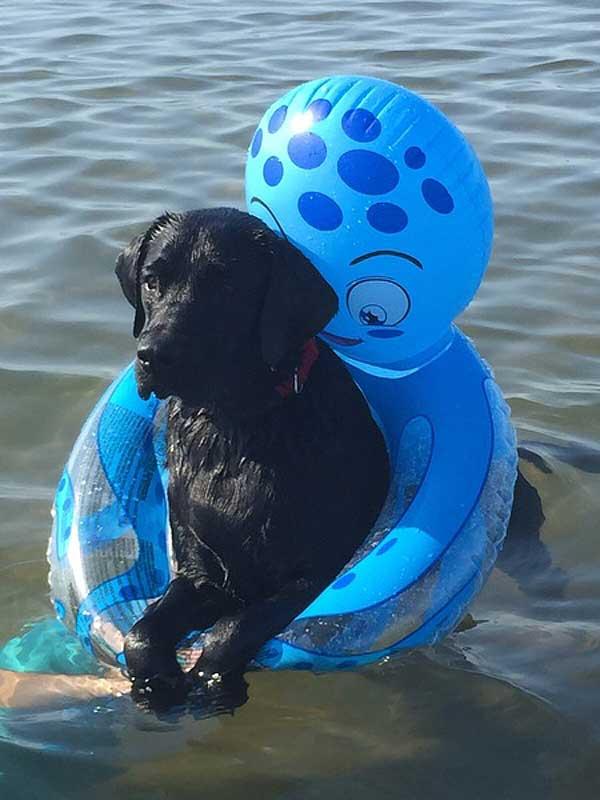 """El concurso de fotos de #perros Zoetis """"Mi perro disfruta"""" ya tiene ganadores..."""