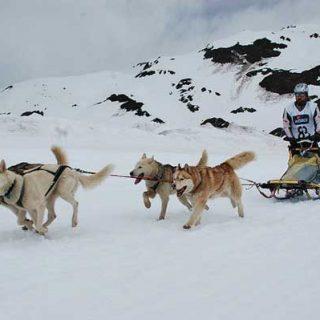 Deporte con #perros. Este fin de semana se estrena la segunda edición de la Copa @GosArtic.