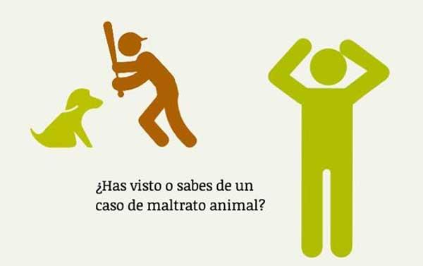 @PartidoPACMA denuncia cachorros agonizando e inyecciones letales sin sedación en el CIPA de Alcorcón.