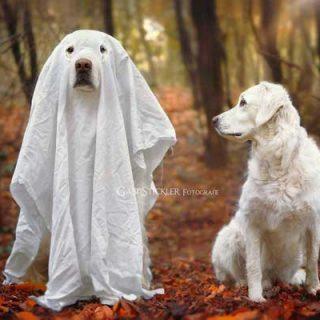 #Fotografía de #perros, Gabi y Mali se van de #Halloween.