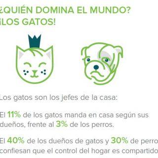 """@houzz El 82% de los dueños de mascotas son más felices gracias a ellas, según el estudio """"Las mascotas y el hogar"""" de Houzz."""