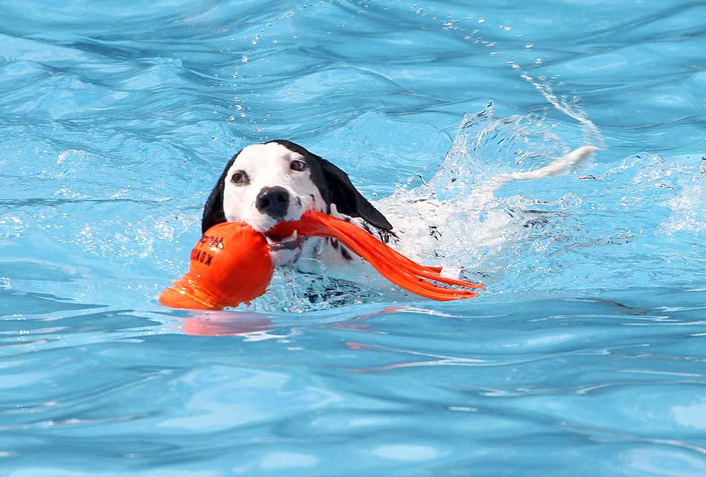 Adiestrar-perro-trae-objeto
