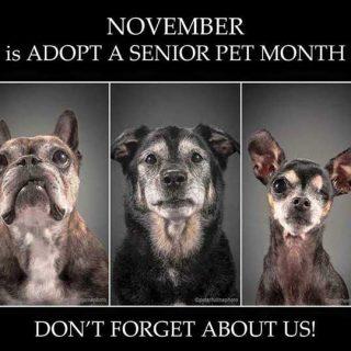 Noviembre, mes de la adopción de los perros mayores
