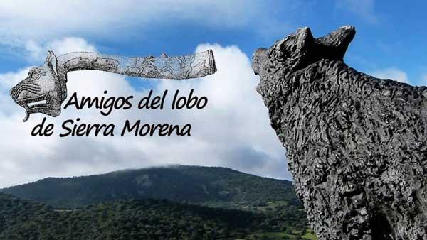 """""""Los ojos del Lobo"""", documental de la Asociación Amigos del Lobo de Sierra Morena."""