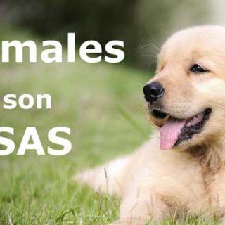 @ObservatorioJDA. Recogida de firmas a iniciativa de Justicia y Defensa Animal para que los animales sean considerados seres sensibles por el Código Civil español.