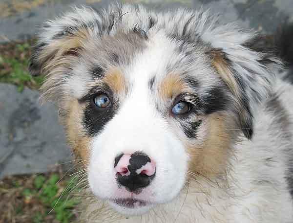 """Un cachorro es un bebé de perro, que no se te olvide que nosotros también fuimos bebés (y más """"pesados"""" que ellos)..."""