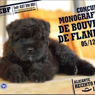 Próximo fin de semana: Exposición Nacional e Internacional Canina de Alicante 2015 (y muchas concursos y monográficos).