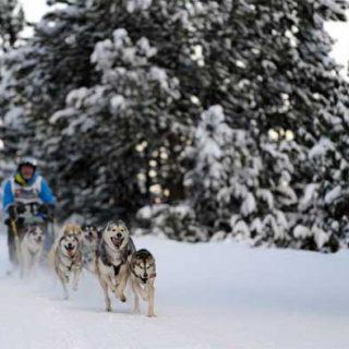 Gran éxito de convocatoria en el estreno de la II Copa Gos Àrtic en Sant Joan de l'Erm