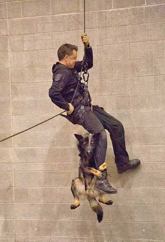 #Adiestramiento #perros. Perro policía... ¡¡¡que hace rapel!!! Una foto que ha dado la vuelta al mundo.