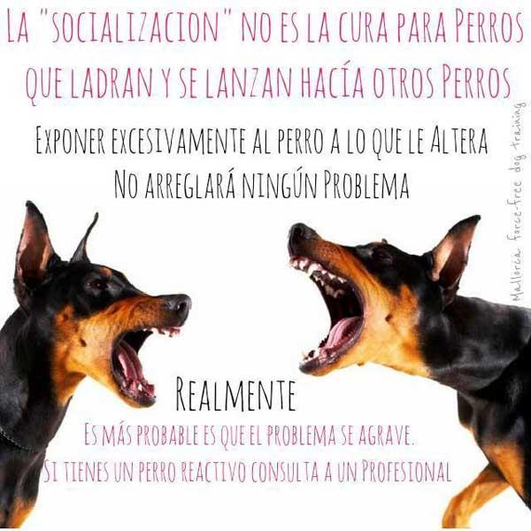 Inundación social y habilidades sociales en #perros.
